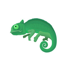 chameleon wild african animal vector image