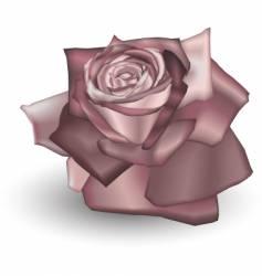 Dusty rose vector