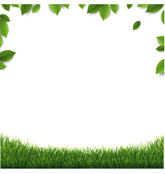 Green leaves frame with green grass isolated vector