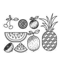 Monochrome silhouette with set of tropical fruits vector