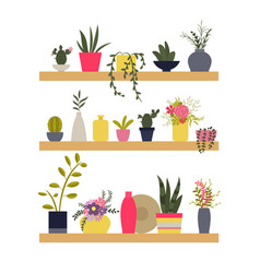 shelves with plants and vases of flowers vector image vector image