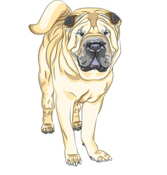 sketch yellow gun dog breed Chinese Shar Pei vector image