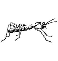 Ant collyris vector
