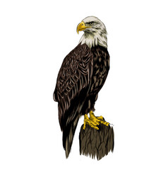 Bald eagle from a splash watercolor colored vector