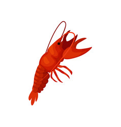 Cartoon lobster on white background crayfish vector