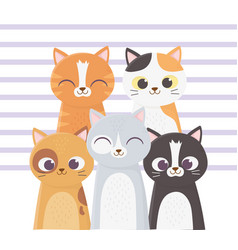 cats make me happy many cats different breed vector image