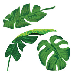 palm tropical leaves set on white background vector image