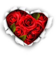 Valentine Heart Card Design Red roses and ripped vector image