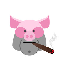 angry boar with cigar aggressive pig isolated vector image