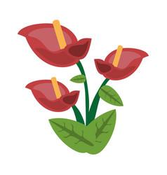 Anthurium flower spring image vector
