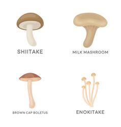 Shiitake brown cap boletus enokitake milk set vector