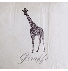 vintage of a giraffe on the old wrinkled paper vector image vector image