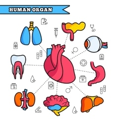 Human organ thin line concept set vector image vector image