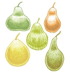 set of hand-drawn pears vector image vector image