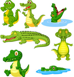 cartoon green crocodile collection set vector image