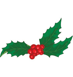 christmas mistletoe with red berries vector image