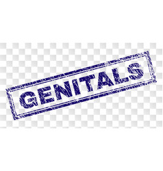 Scratched genitals rectangle stamp vector