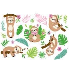 set isolated funny sloth and tropical plants vector image