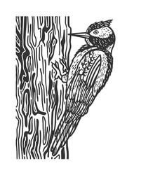 woodpecker bird sketch vector image