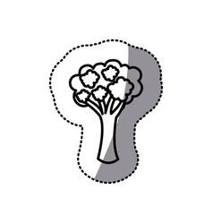 figure vegetable broccoli icon vector image