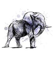 Colored hand sketch of an elephant vector