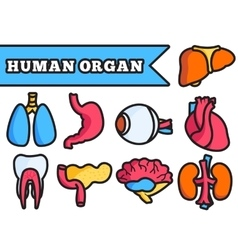 Human organ thin line concept set vector
