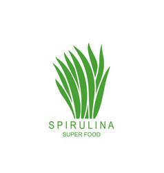 spirulina vector image