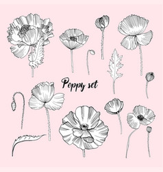 set of various poppy contour flower collection vector image vector image