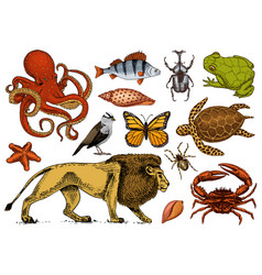 Set animals reptile and amphibian mammal and vector