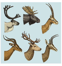 Set horn antlers animals moose or elk vector
