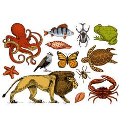 Set of animals reptile and amphibian mammal vector