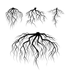 tree underground roots plant underground vector image