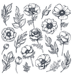 Collection hand drawn anemone flowers vector