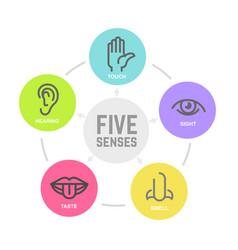 Five human senses vector