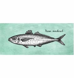 ink sketch horse mackerel vector image