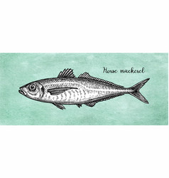 ink sketch of horse mackerel vector image