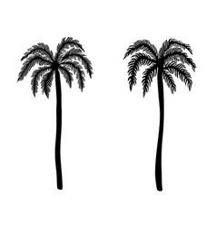 set hand drawn palm tree design element vector image