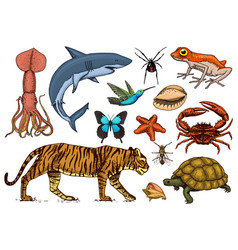 Set of animals reptile and amphibian mammal and vector