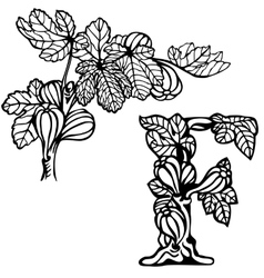 Figs on a branch F vector image