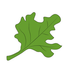 isolated leaf design vector image