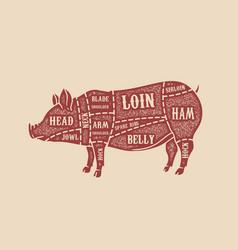 pig butcher diagram pork cuts design element for vector image