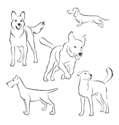 set dogs on white background vector image