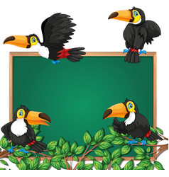 Toucan on blackboard frame vector