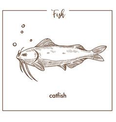 catfish sketch fish icon of sheatfish vector image vector image
