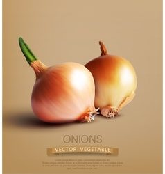 two onions vector image vector image