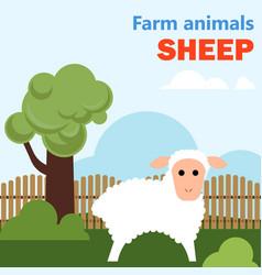 Farm animal sheep vector
