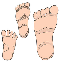 Set of foot sole vector