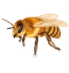 Sitting Bee vector