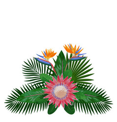 Tropical bouquet composition vector
