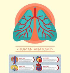 human anatomy medical poster with internal organs vector image